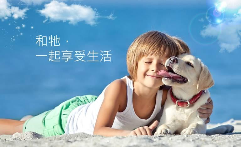 台灣動藥網頁設計